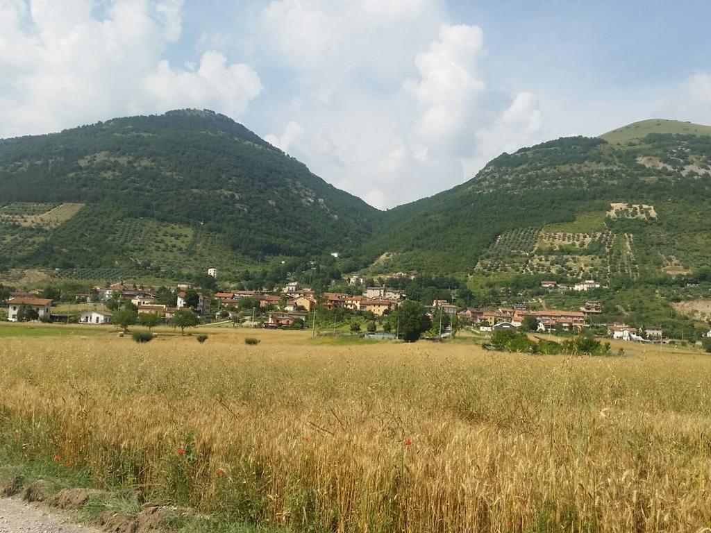 campi di grano Cammino Francesco 2016