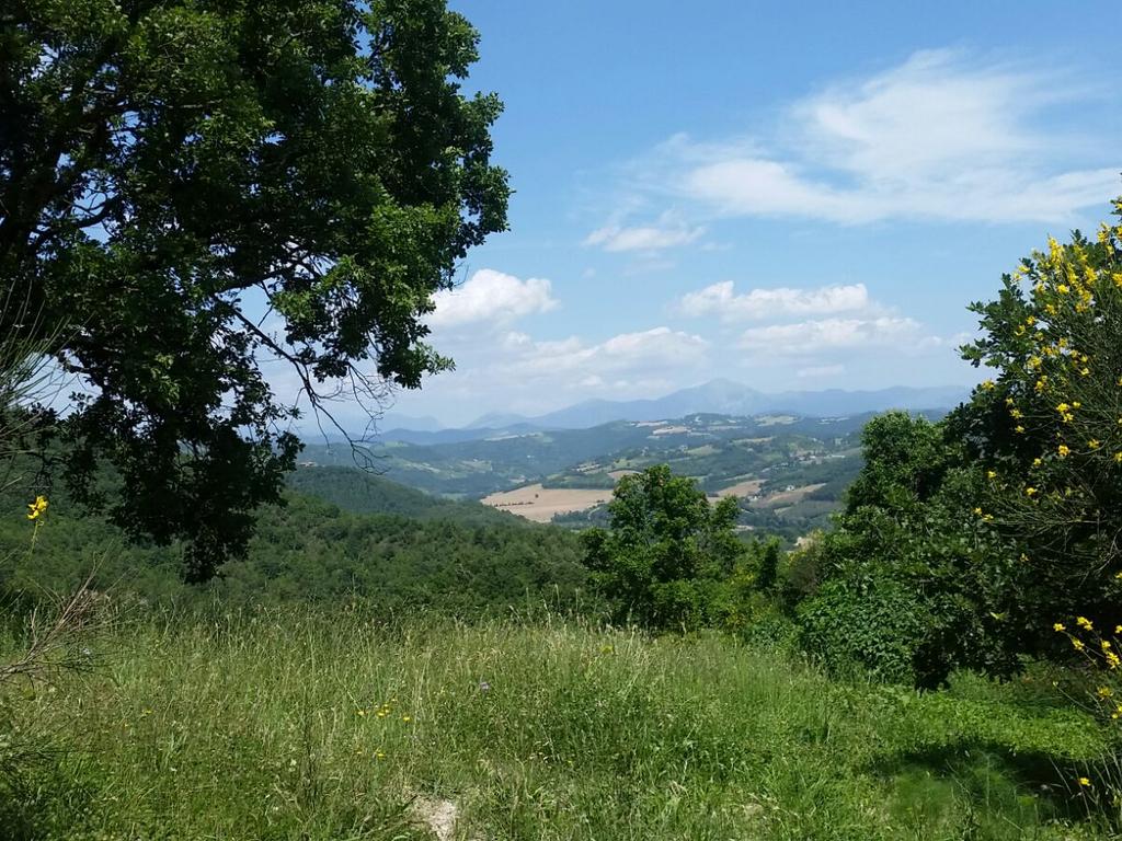 paesaggio2 Cammino Francesco 2016