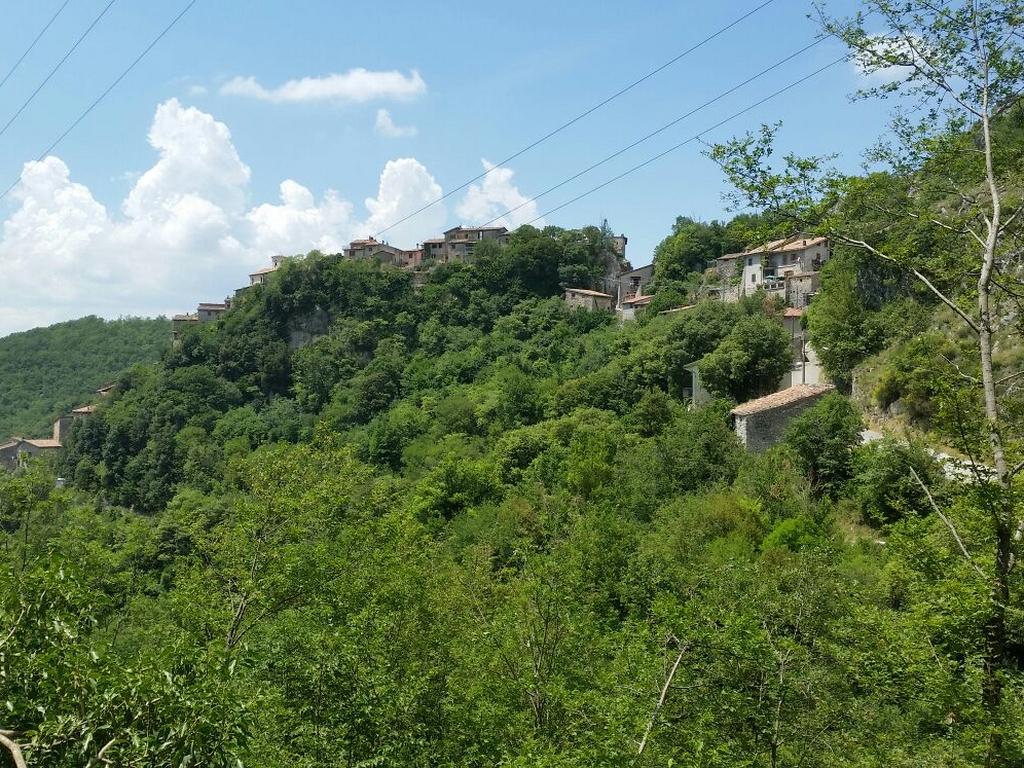 boschi Cammino Francesco 2016