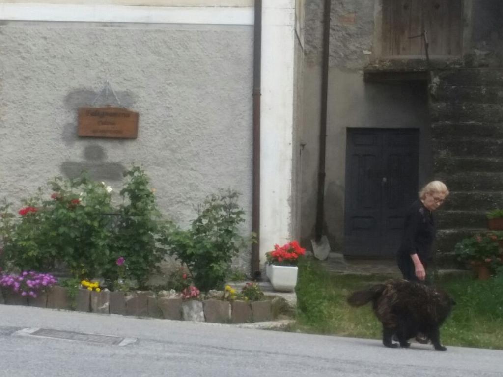 donna e cane Cammino Francesco 2016