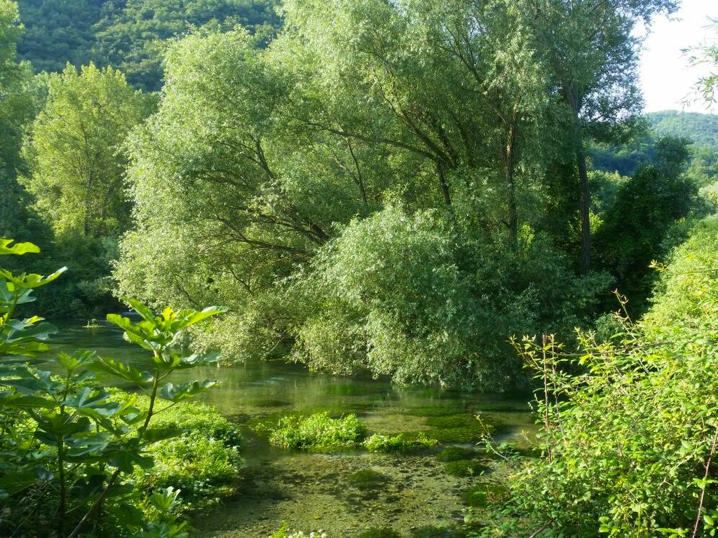 fiume e verde Cammino Francesco 2016