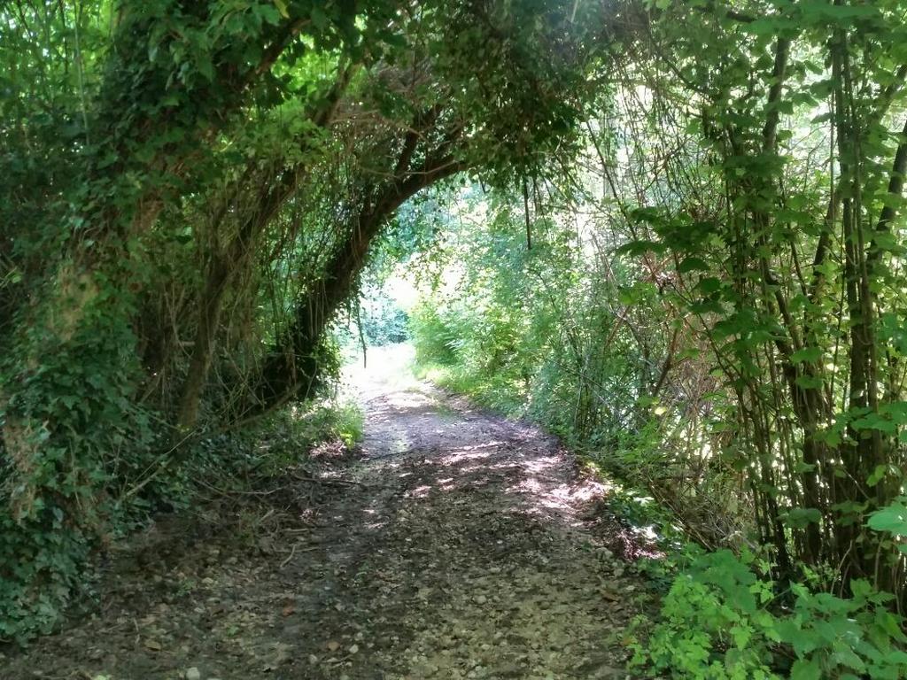 sentiero bosco Cammino Francesco 2016