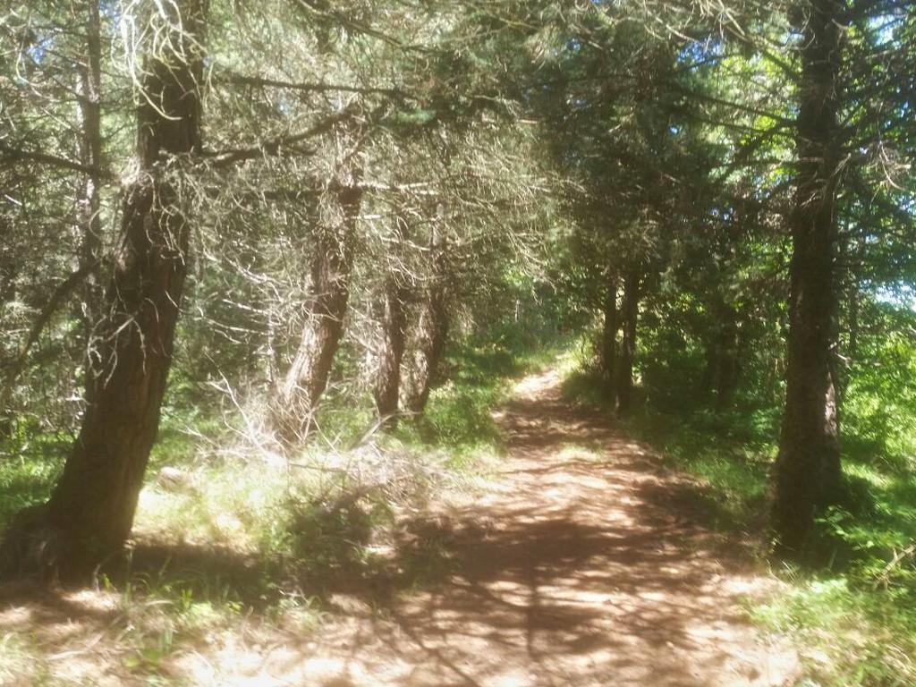 strada nel bosco Cammino Francesco 2016