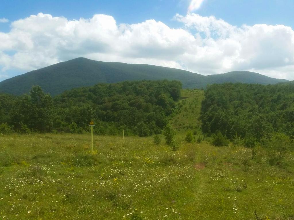 verdi colline Cammino Francesco 2016