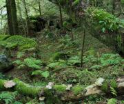 Funghi Val di Cama_Passicreativi