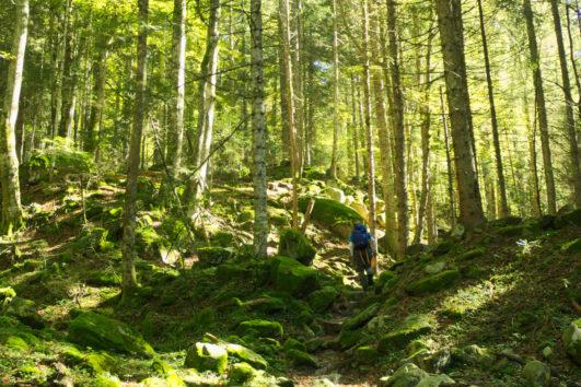 Il bosco nascosto della Val di Cama_Passicreativi
