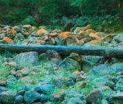 il Rio Cama_Val di Cama_Passicreativi