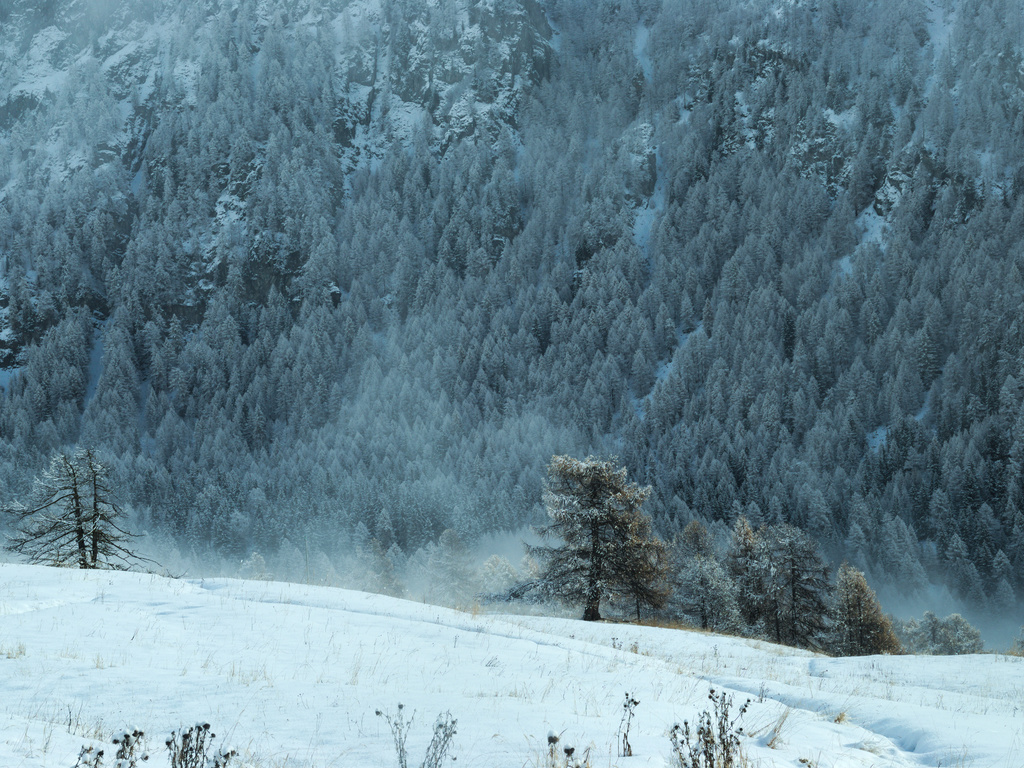 Bivacco Reboulaz white trees 201