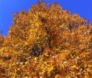 Foliage_Giardino_Bazzigaluppi_Vigevano_Passicreativi