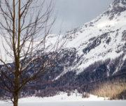 Fototrek Val Roseg Passicreativi alberi