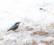 Fototrek Val Roseg Passicreativi uccellino